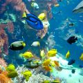 Aquarium-copyright-HdN